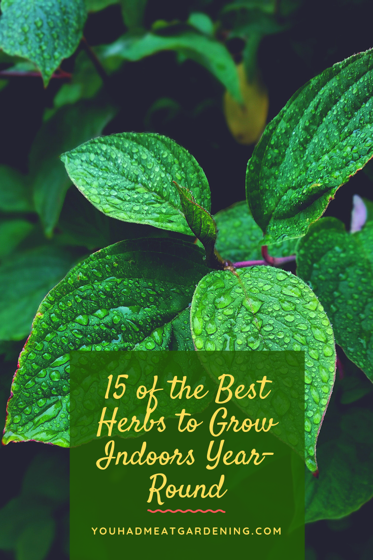 15 Of The Best Herbs To Grow Indoors Year Round Yhmag 640 x 480
