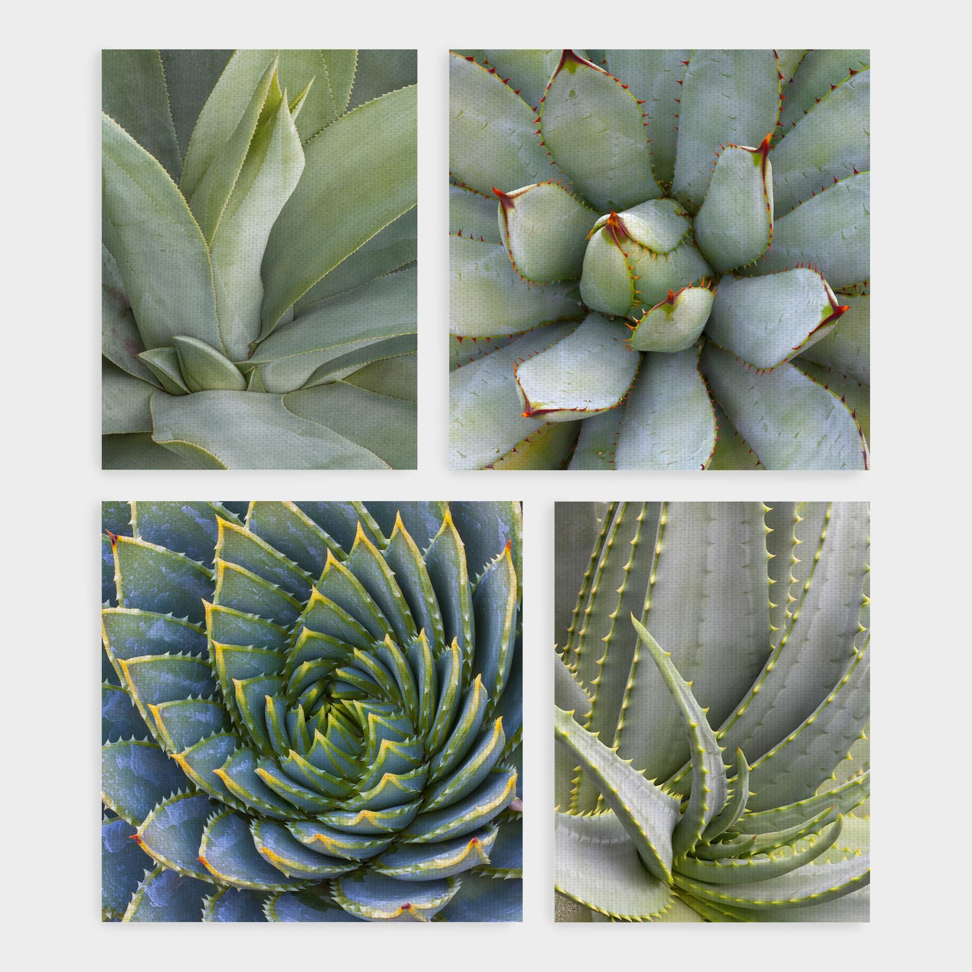 b5333a5f207 Succulents by Robin Hanson Canvas Print Wall Art Set of 4 - Large by World  Market