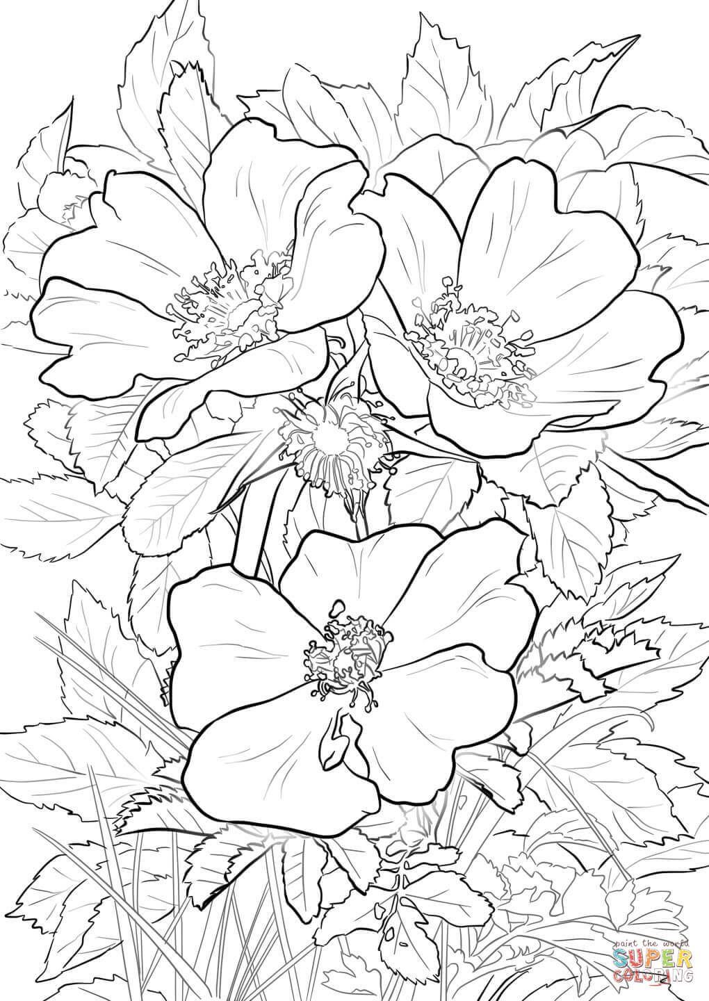 Wild Prairie Rose coloring page from Flowers category. Select from 27734  printable crafts of cartoons,… | Rose coloring pages, Flower coloring pages,  Coloring pages