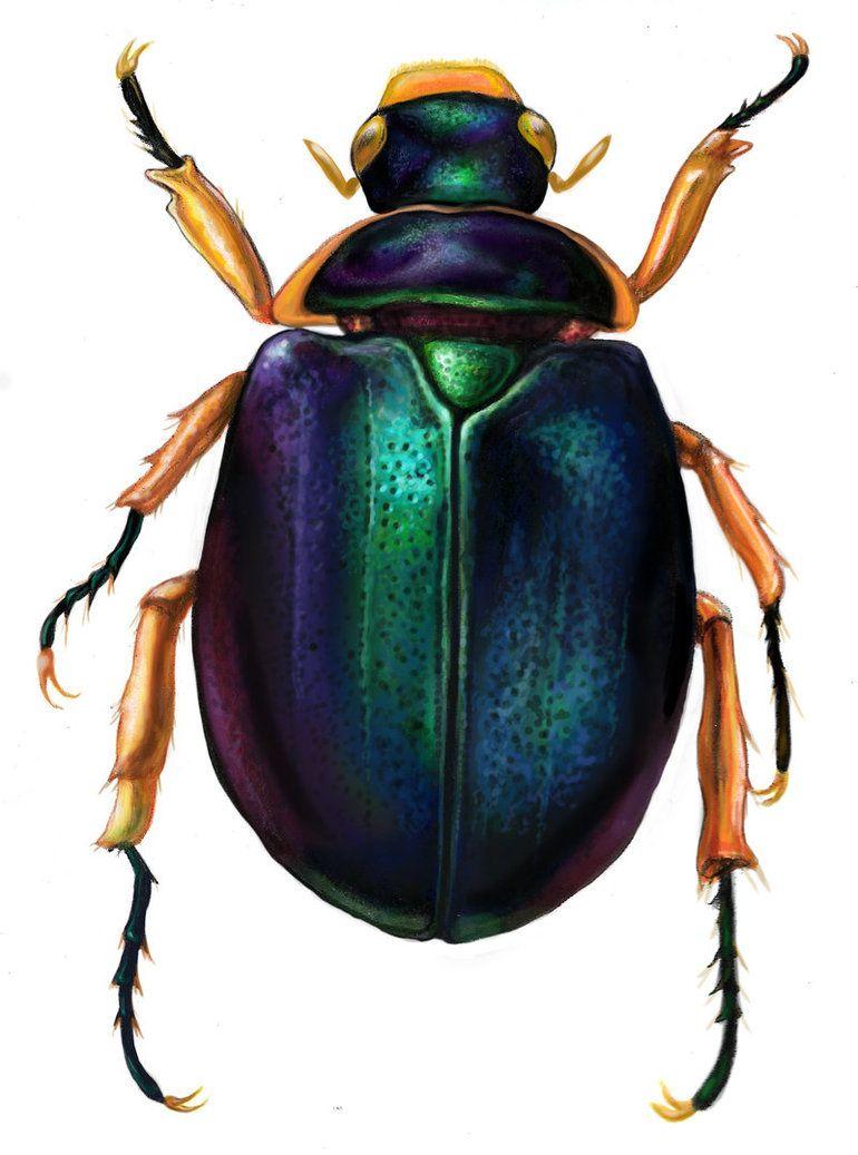lovely nature insectes encrer pinte. Black Bedroom Furniture Sets. Home Design Ideas