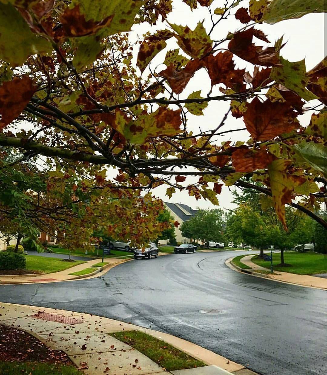 ㅤ إن أذبل الخريف أوراق حياتنا ونثرها في ردهات دنيا موجعة فحتما سيأتي شتاء يسكنها ثم ربيع يحييها ليثبت بأن الله يغدق على الصابر عطاء بعد Nature Sidewalk Life