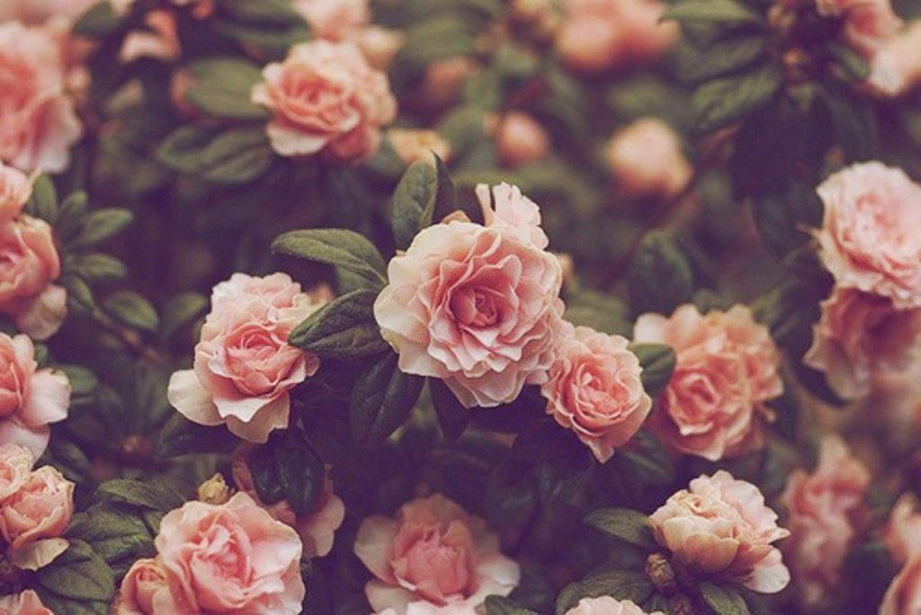 Changing Expectations Men Can Cry Sometimes Vintage Flowers Wallpaper Vintage Flower Backgrounds Flower Backgrounds