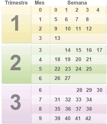 Calendario De Embarazo Semanas Y Meses.Como Calcular Semanas Meses Y Trimestres De Embarazo Bebe