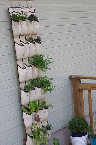 Growing herbs in a shoe organiser. Cute idea.