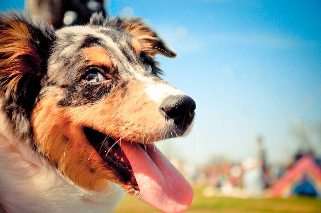 These numbers don't lie! Austin is yet again the largest no-kill city in the nation. Now that's something to bark about.