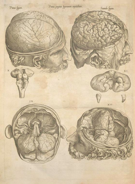 Human Brain Victorian Medical Illustration Brooch