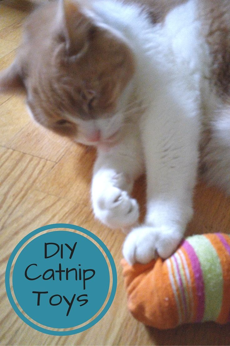 A quick and easy tutorial on how to make homemade catnip