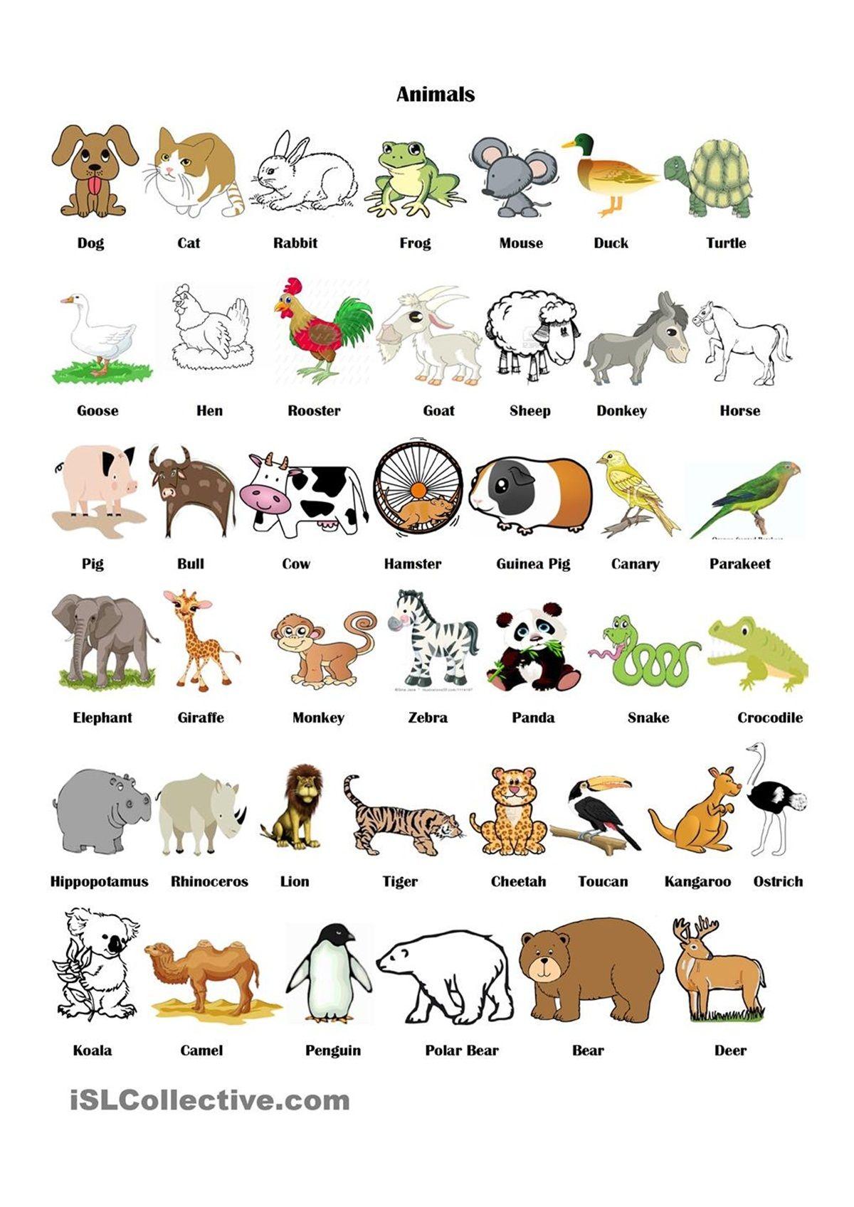 Animaux Animaux anglais, Apprendre l'anglais et
