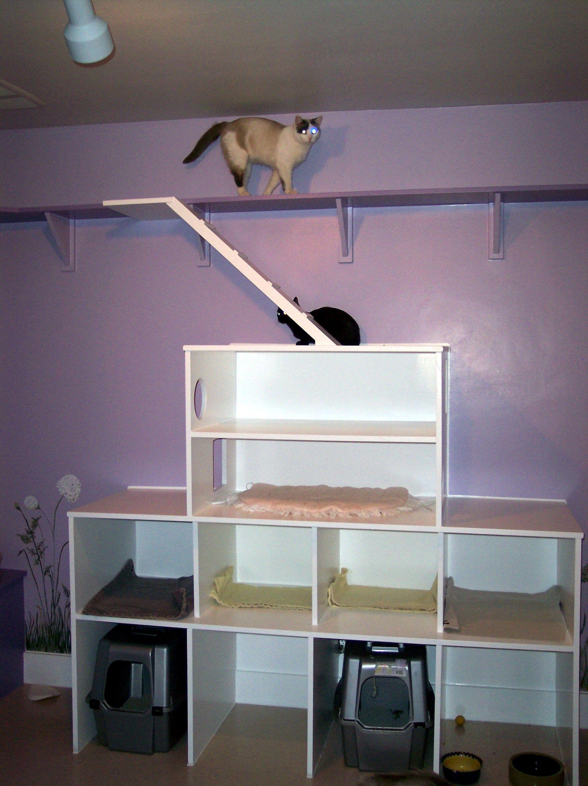 Random cat room idea . Haha my cat would be in heaven