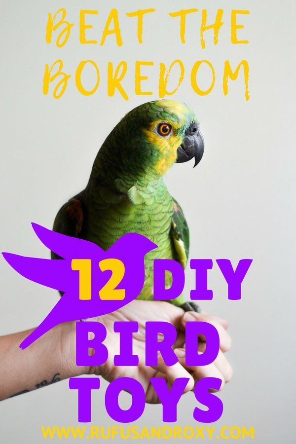 how to make your own bird toys at home