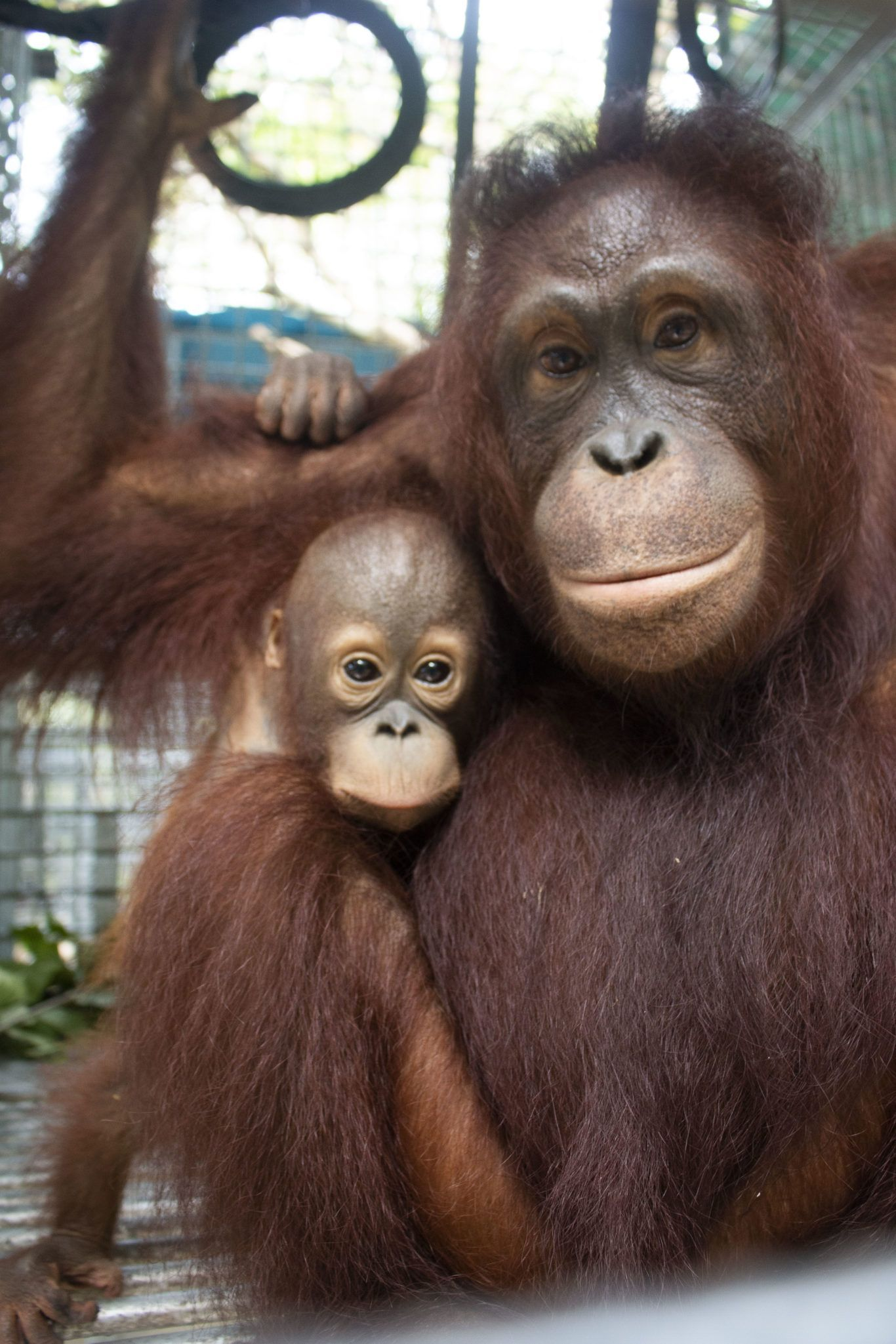 Zoo Animals Baby orangutan, Orangutan, Animals beautiful