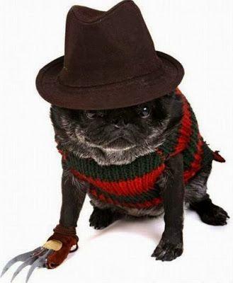 Freddy Kruger Pug