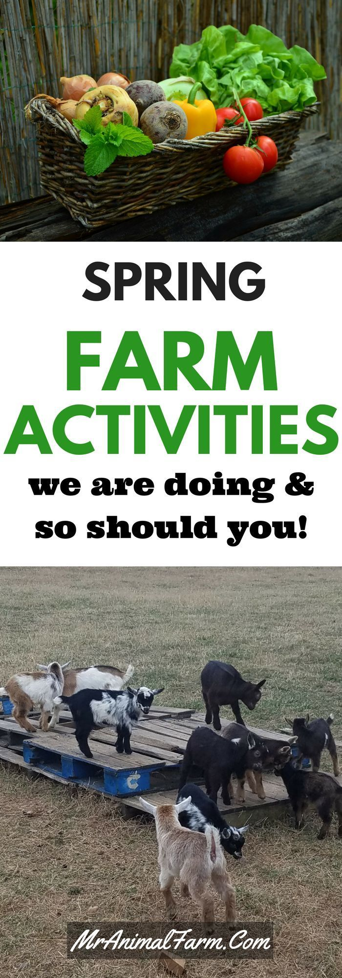 Spring is always a busy time of year on the farm. Check out these must do Spring Farm activities.