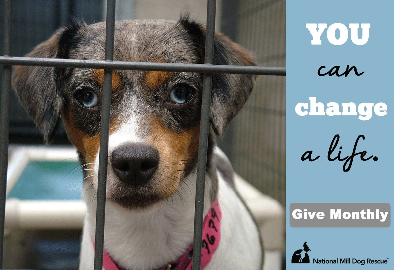 Donate to (With images) Rescue dogs, Dogs, Puppies
