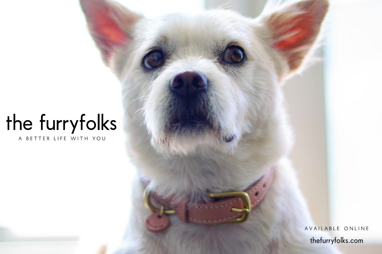 The Furryfolks Is A Lifestyle Brand For The Animal Companions We Create Timeless Pet Products Using Only High Quality Cute Animals Animal Companions Animals