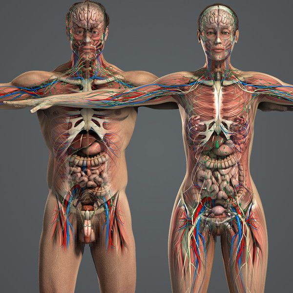3d Model Male Female Anatomy Body Male And Female Anatomy Complete