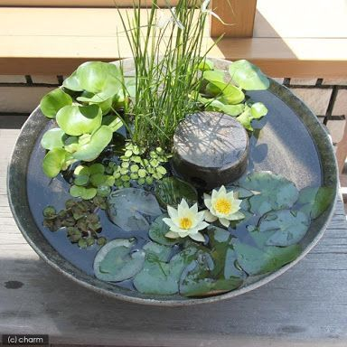 Water bowl with water lilies