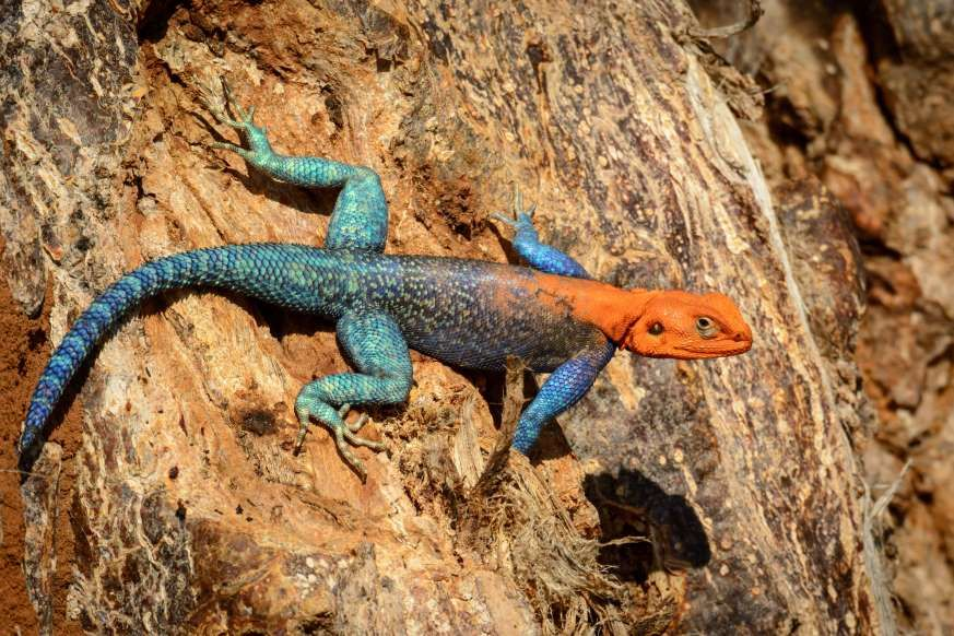 Emerald Grass Lizard Lizard Pet Birds Reptiles