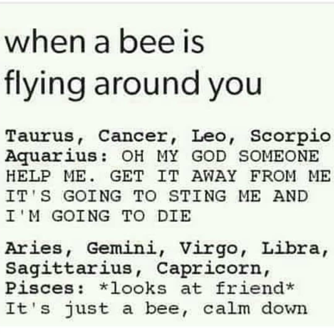 Aries So True It Happened Today And I Was Like Stop Screaming Mate Chill Out Zodiac Signs Gemini Zodiac Signs Funny Zodiac Sign Traits