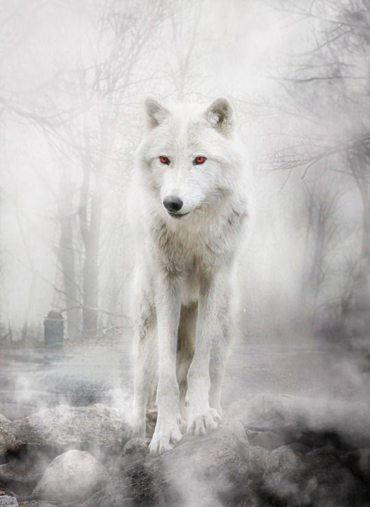 Liancary Wolf Zeichnung Luftikus Tiere