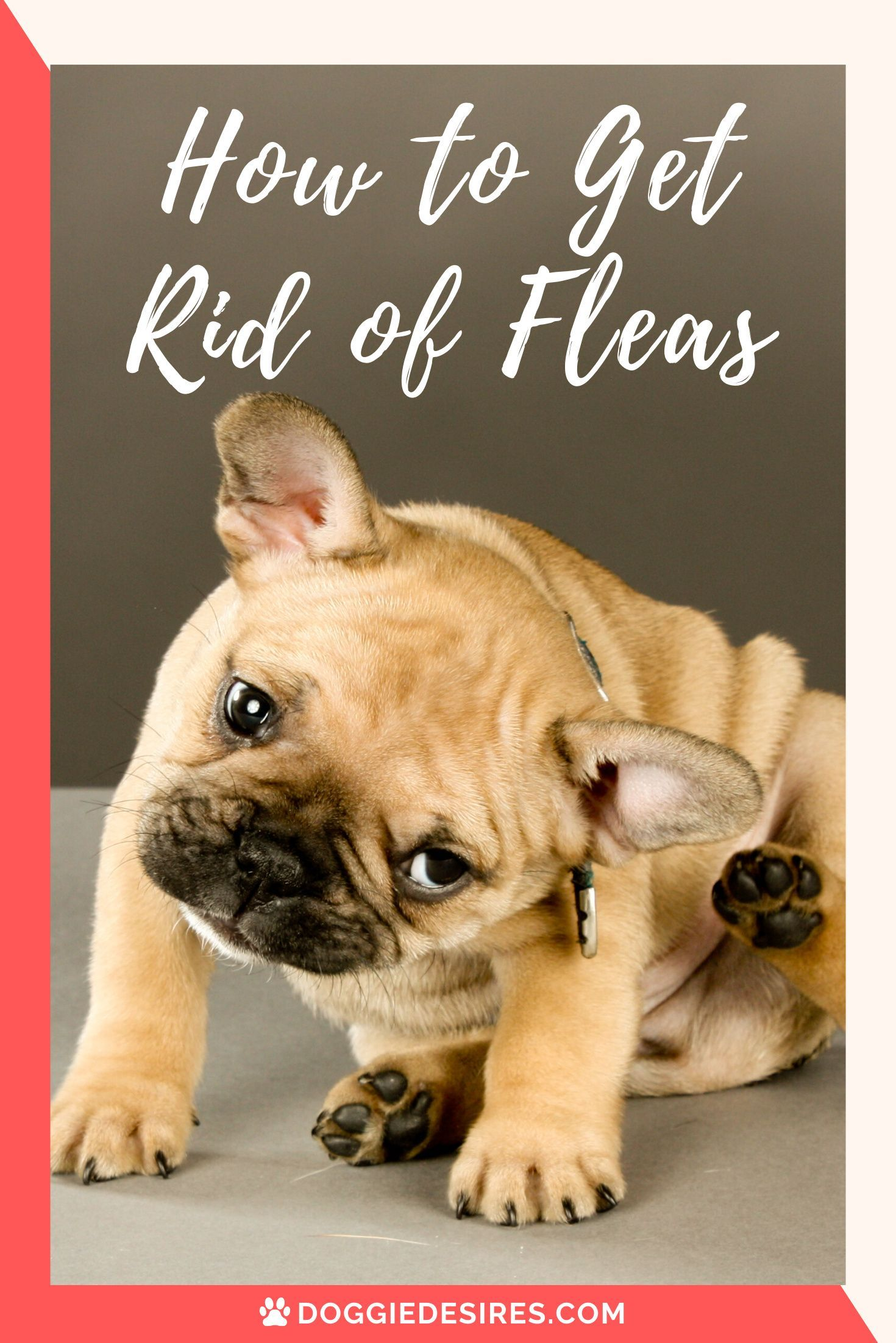 How To Get Rid Of Fleas When Your Dog Is Itching And You Need Help In 2020 Dog Blog Dog Care Fleas