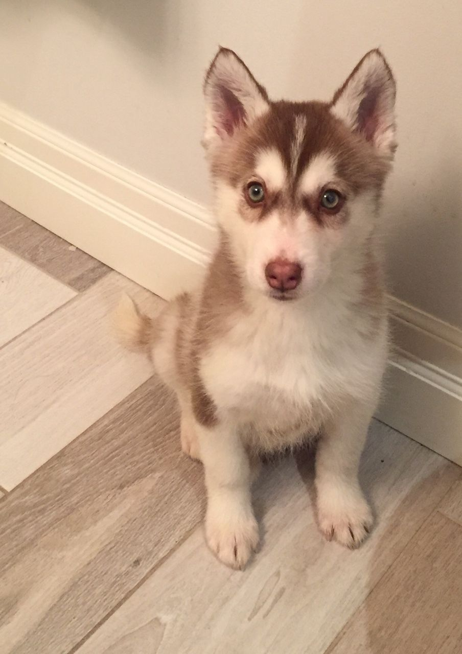 Wolfcoast Green Eyed Girl Cute Dogs And Puppies Homeless