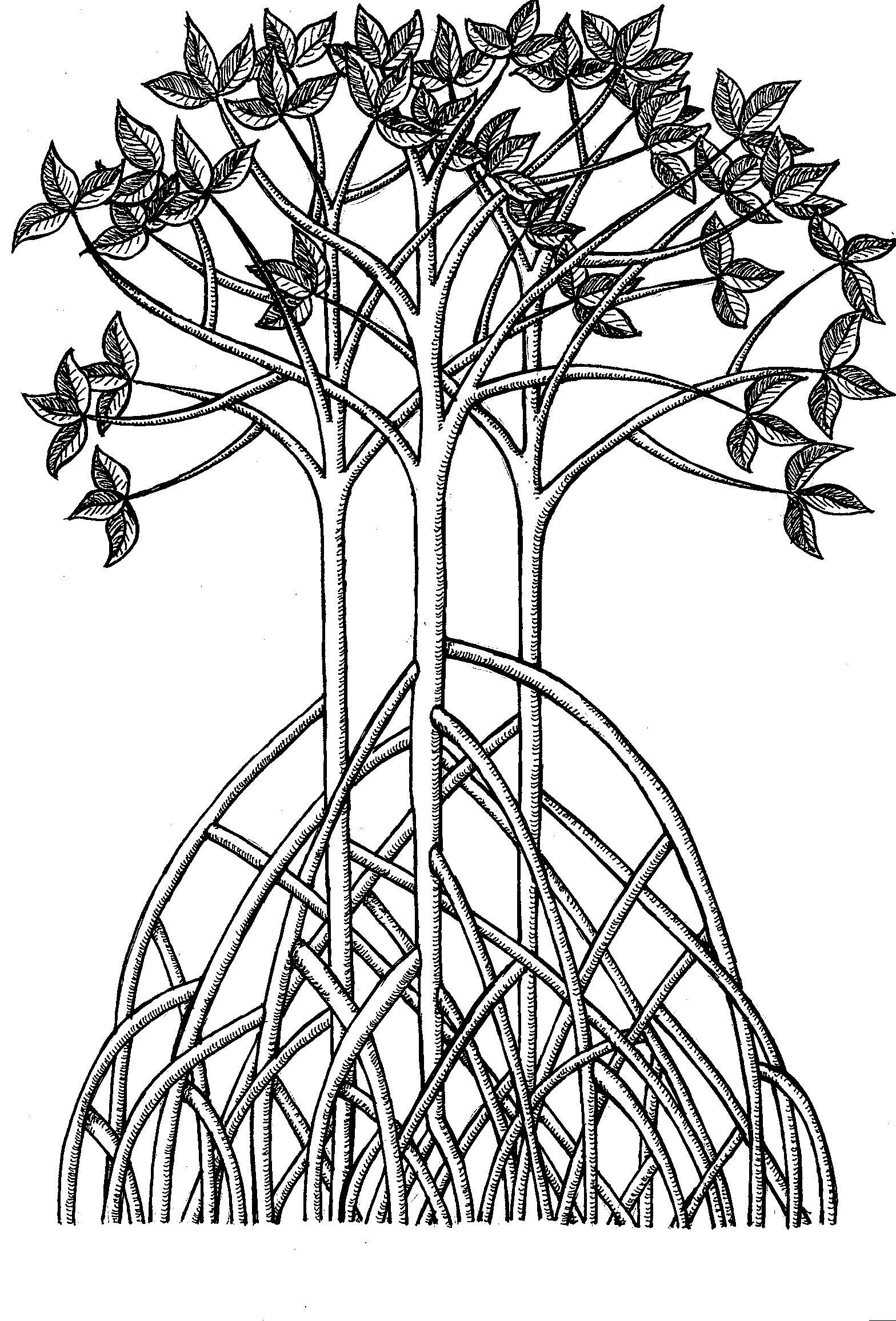 Mangrove Trees Tangled
