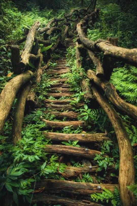 The Dark Path Taiwan Nature Photography Fantasy Landscape Landscape