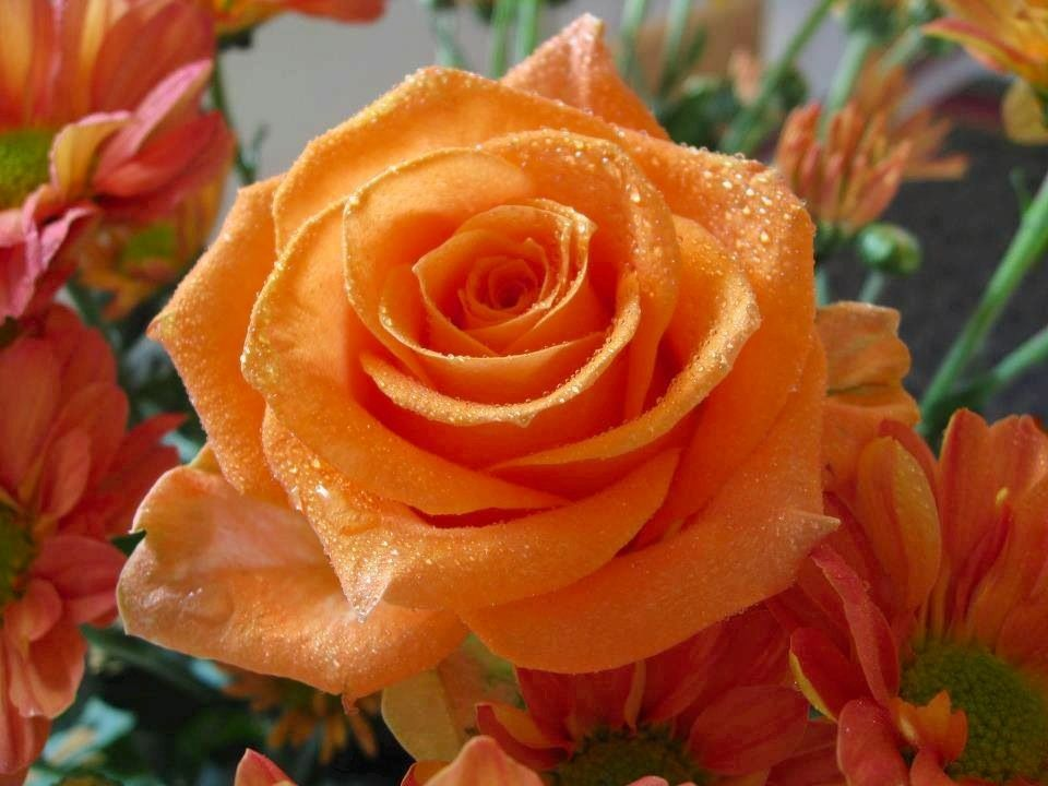 Rose via Carol's Country Sunshine on Facebook