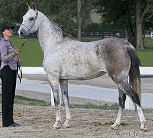 Website author says mare has one blue eye, and it's common in the breed. Mare's name is not given, but added picture to show white markings.