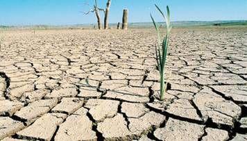 campo afectado por sequía