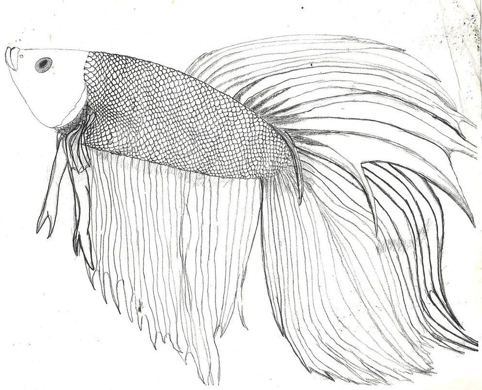 Drawn Fish Betta Fish 3 Fish Coloring Page Drawn Fish Animal