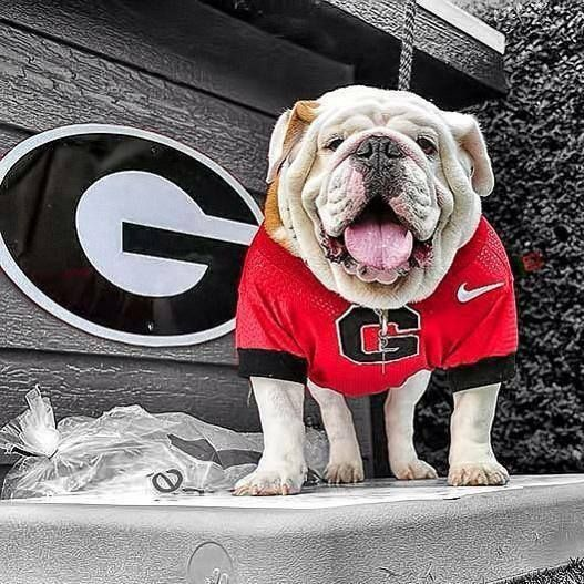 Pin By Fran R Collins On Georgia Born And Bred Georgia Bulldogs