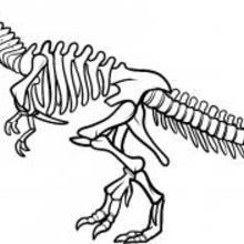 Comment dessiner un squelette de dinosaure dinosaur - Dessiner un squelette ...