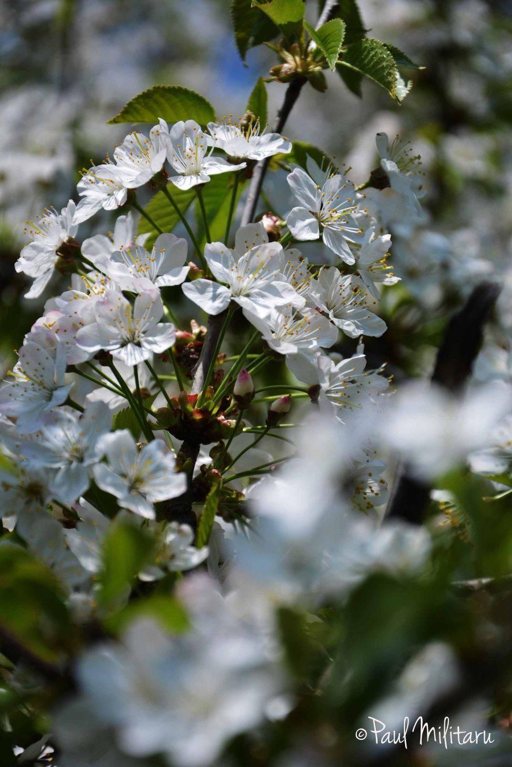 100 Tree With White Flowers That Smell Good Ok Sevdm Ekler
