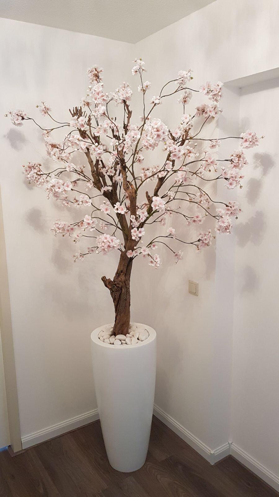 Licht roze bloesemboom in hoogglans witte pot Interesse