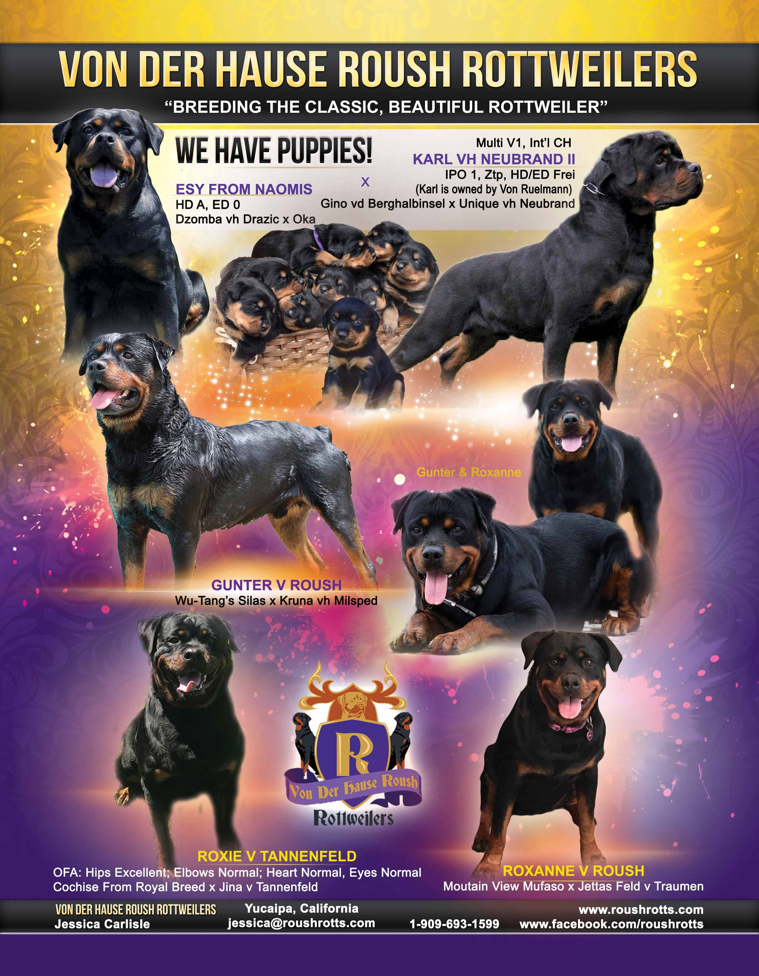 Von Der Hause Roush Rottweilers Breeding The Classic Beautiful
