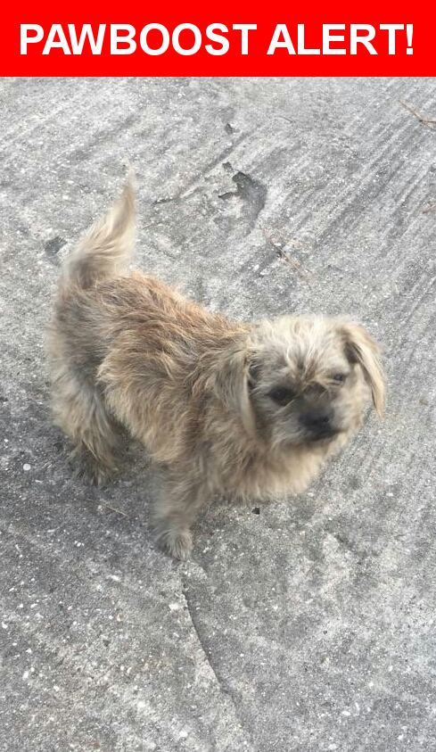 Is this your lost pet? Found in Houston, TX 77067. Please spread the word so we can find the owner!  Description: Small male dog found close to Rankin and 45. Not sure if he is microchiped but will take to get checked this Sat. He is being held in a friend's backyard right now. Friendly!!  Nearest Address: Rankin & 45