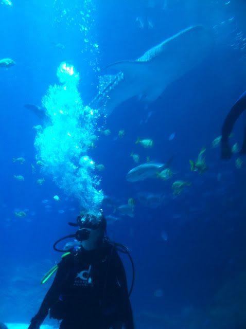 Scuba Diving At The Georgia Aquarium Georgia Aquarium Scuba Diving Scuba