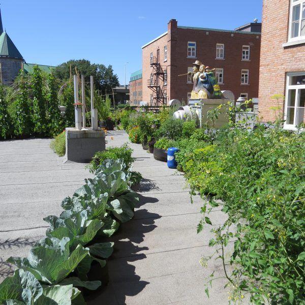 Agriculture urbaine sur le toit de lhôtel du vieux québec, par ...