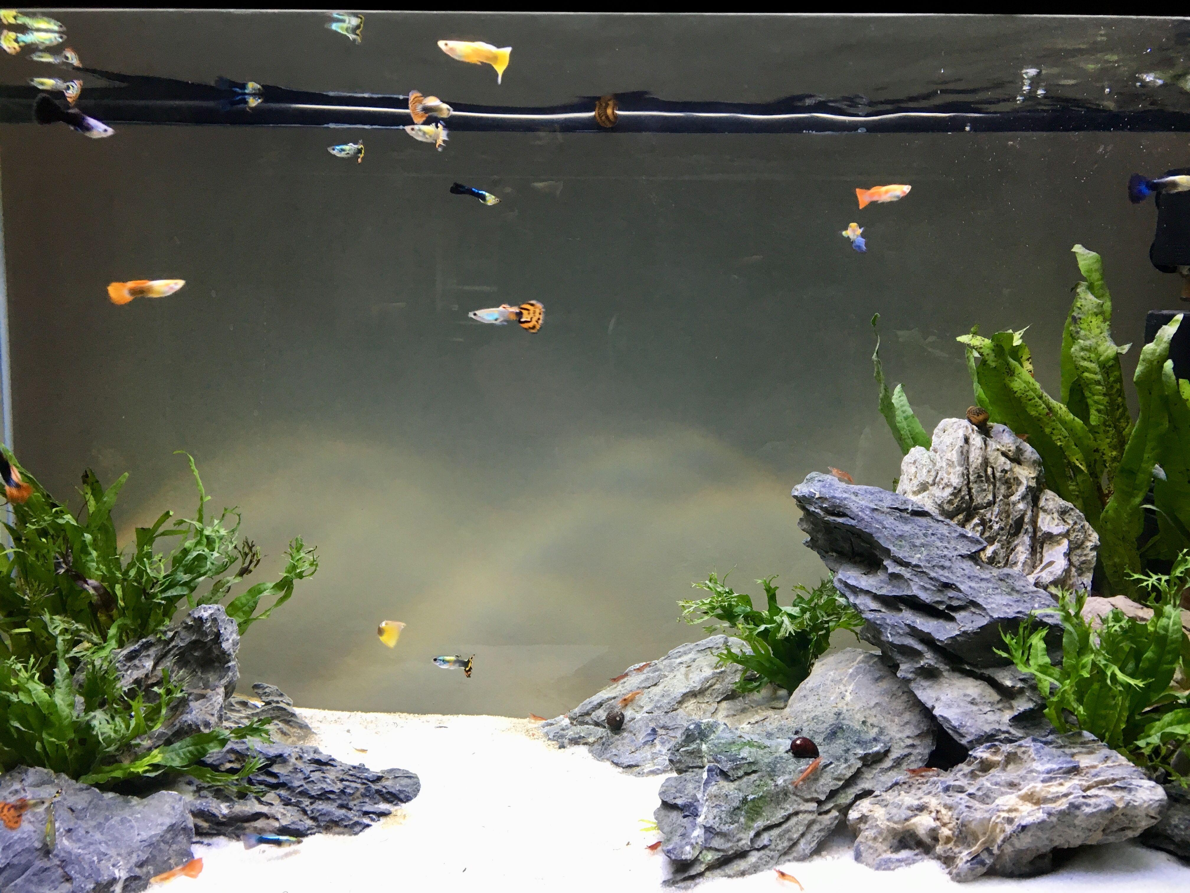Fish Image By Abbie Watson Small Fish Tanks Fish Tank