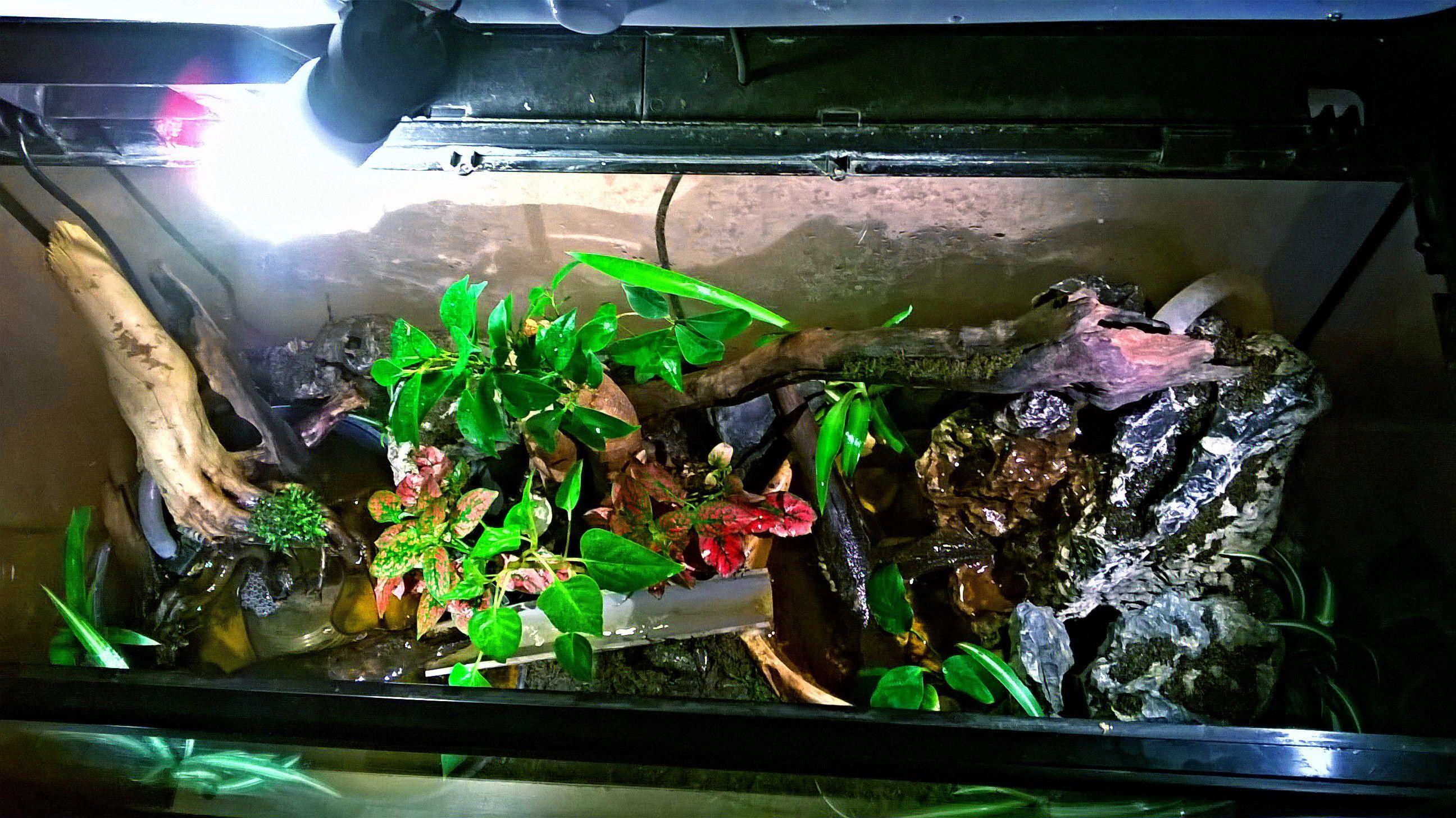 Meilleur De De Ventilateur Aquarium Schème