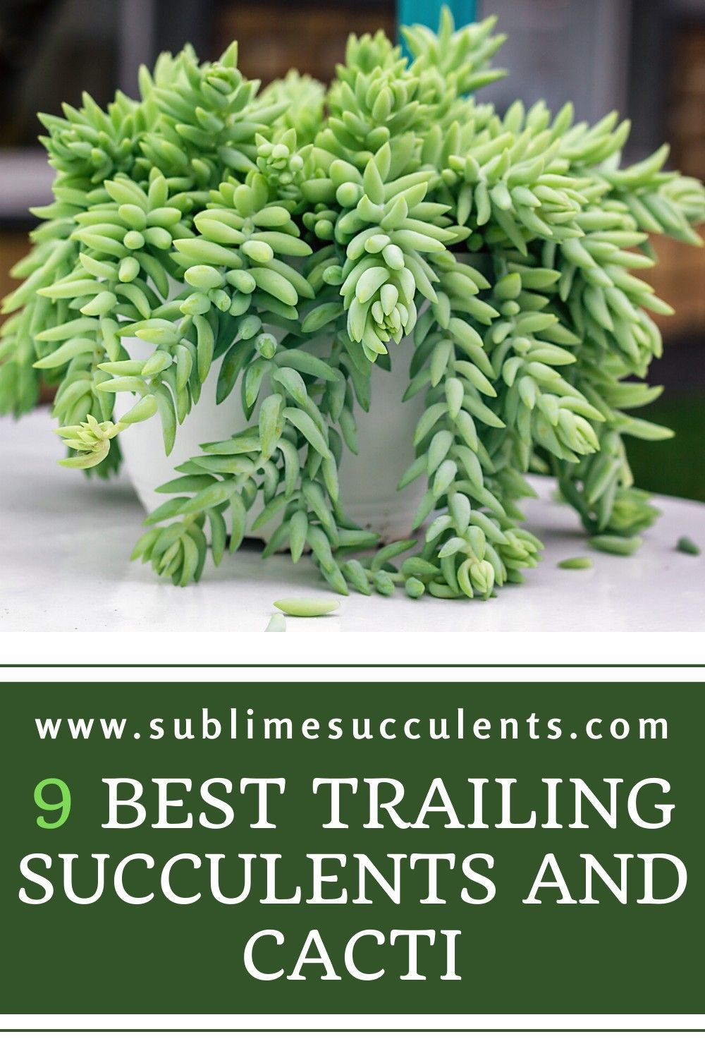 9 Best Trailing Succulents And Cacti In 2020 Succulent Outdoor Succulent Gardening Flowering Succulents