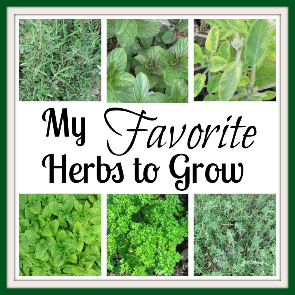 Easiest Herbs to Grow- Culinary and medicinal!
