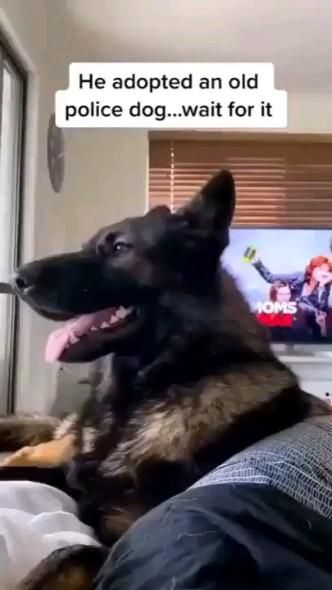He adopted an old police dog...wait for it