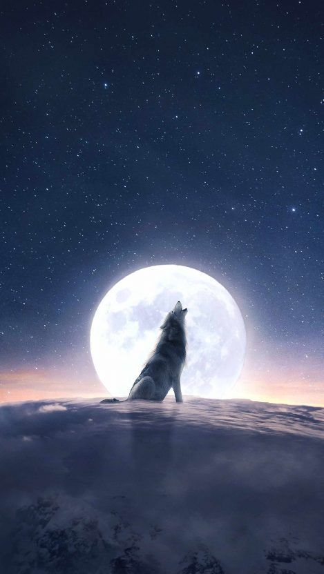 Moon Wolf Howl Iphone Wallpaper Iphone Wallpapers Moon Wolf Howl Iphone Wallpaper Iphone Wallpapers In 2020 Iphone Wallpaper Wolf Wolf Wallpaper Wolf Background