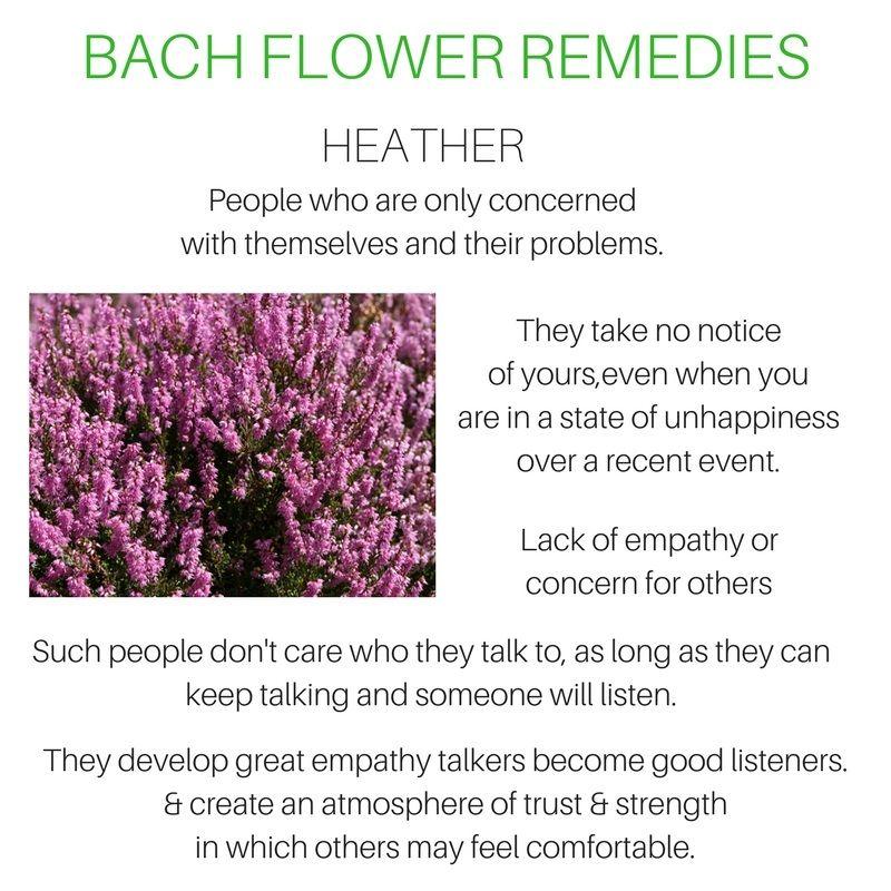 Heather Bach Flower Remedies Flower Remedy Bach Flowers