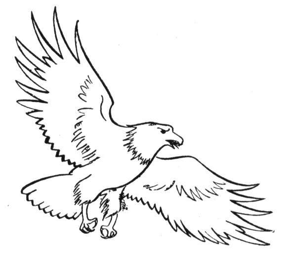 eagle14 (577×5)  bird coloring pages owl coloring