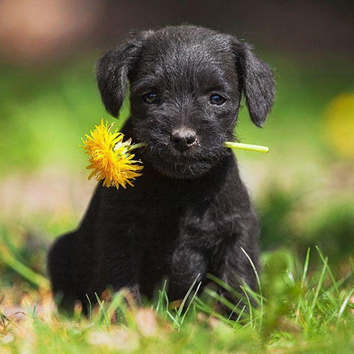Una flor para ti!!!