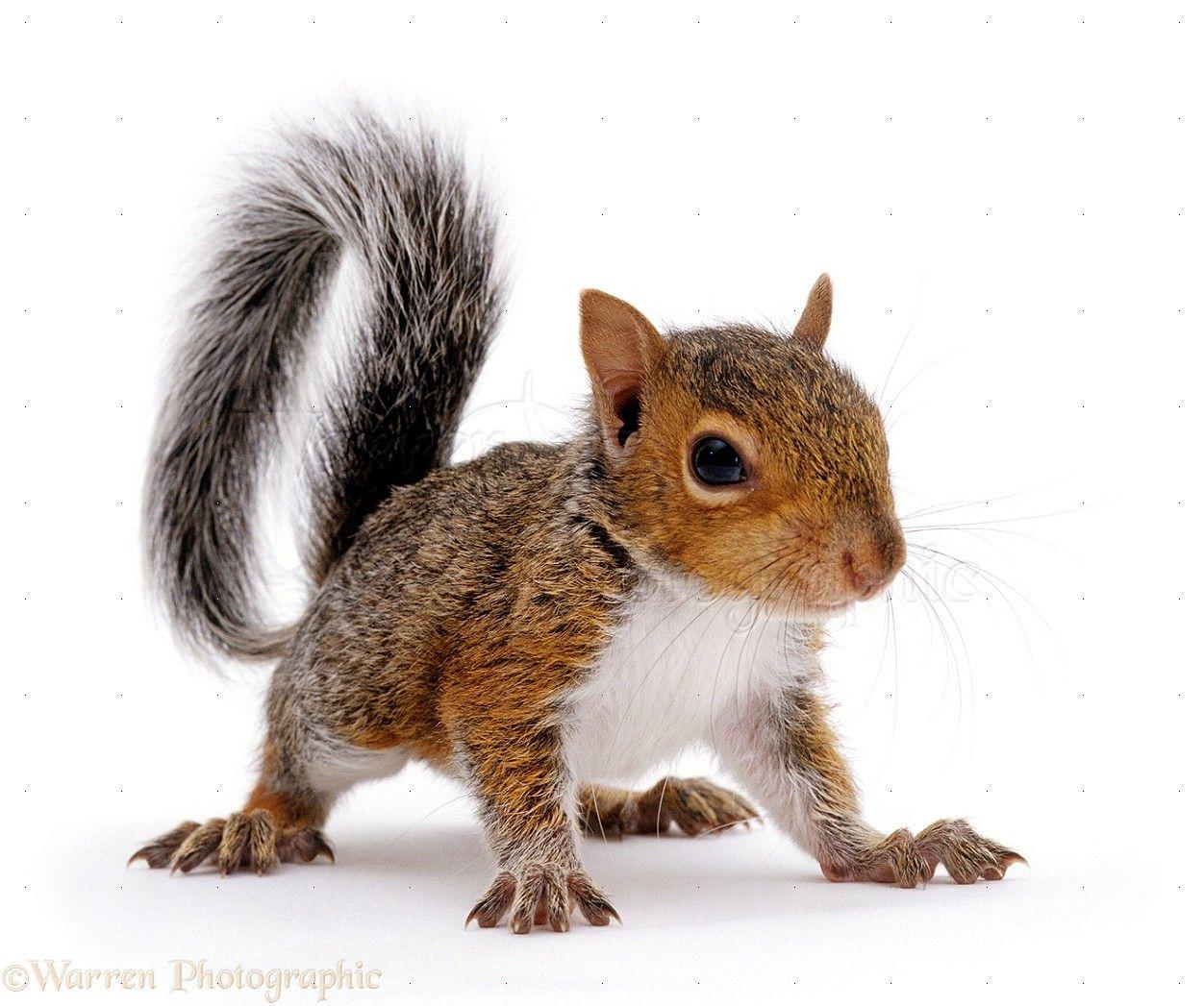 A Woodland Walk** | Pinterest | Squirrel, Chipmunks and Animal